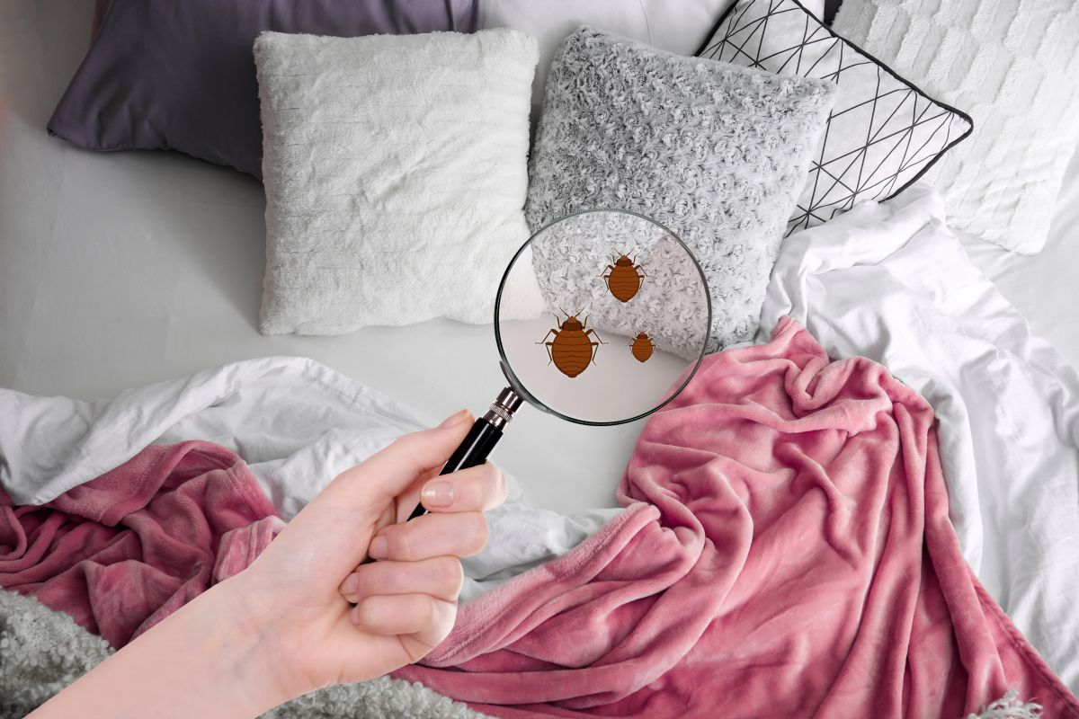 Punaise de lit Cabriès